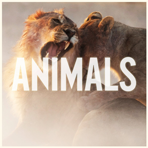 Animals Ringtone Download Free