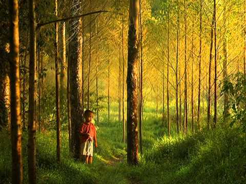 Forest Hymn Ringtone Download Free
